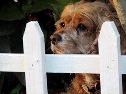 picture of the cute dog behind the fence