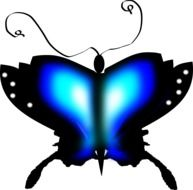 Butterfly Insect Blue Black drawing