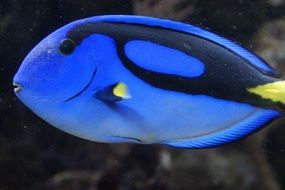 neon blue exotic fish