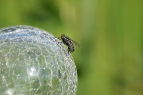 fly on a crystal ball