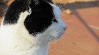 portrait of a black and white cat outdoors