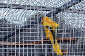 Captivity Cage Bird