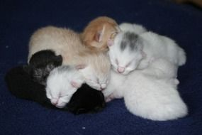 Cute colorful domestic kittens are sleeping