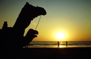 walking camels at the sunset