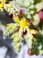 bee pollinates bright flowers