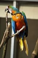 tropical parrot on a branch