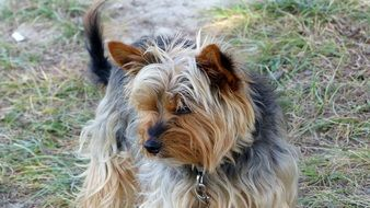 cute domestic dog with collar