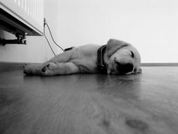 Black and white photo of Puppy is on a Floor