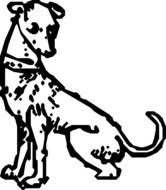 drawing of a dalmatian dog on a white background