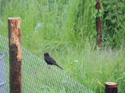 black bird on a wire fence among nature
