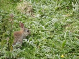 Rabbit Wild Nature Animal