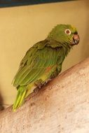 green parrot on a tree branch