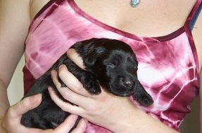 cute black sleeping puppy in her arms