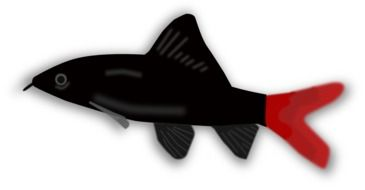 graphic image of a black fish with a red tail