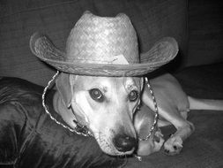 black and white photo of a dog in a hat