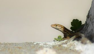 Small lizard in nature