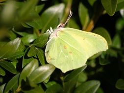 yellow butterfly on green leaves in spring