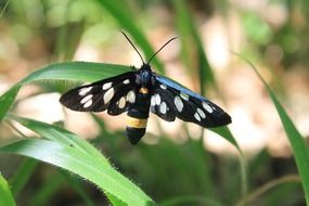 spotted black butterfly on the blade of grass