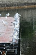 Lake Seagulls