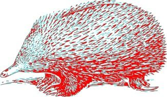Echidna, red and blue drawing