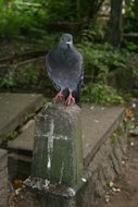 the pigeon is sitting on the monument