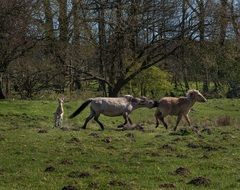 running horses on the spring meadow