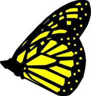 yellow butterfly with black stripes