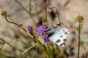 butterfly sits on a flowering plant