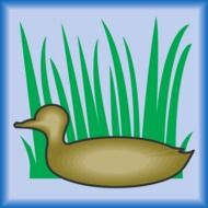 painted duck and swamp grass