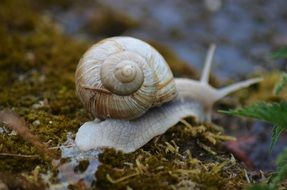 crawling snail after rain