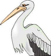 graphic image of a white pelican