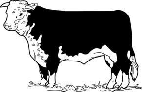 Cow Standing drawing