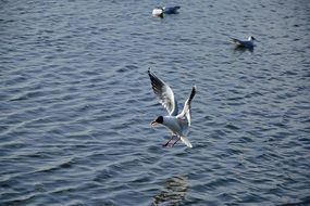 seagulls hover over the blue sea water
