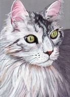 colored pencil drawing cat