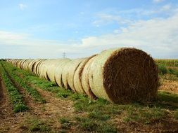 long row of Straw bales on Field
