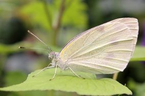 white butterfly on a green leaf in spring