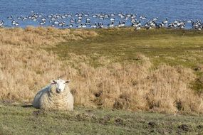 delightful Sheep Pasture