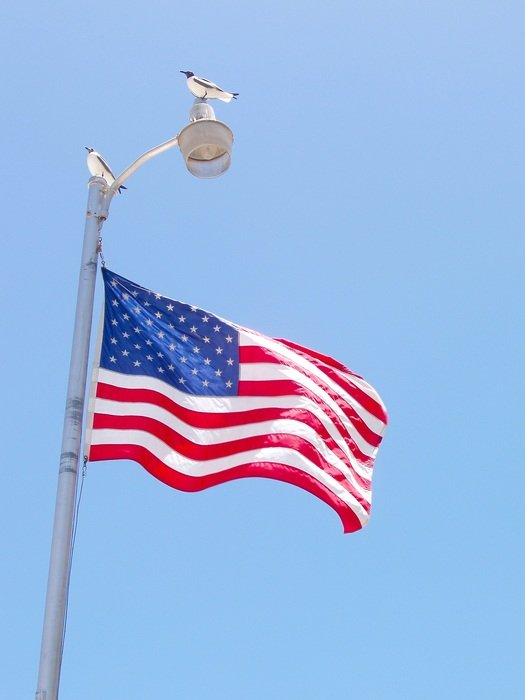 seagull sits on pile above Usa Flag winding at blue sky