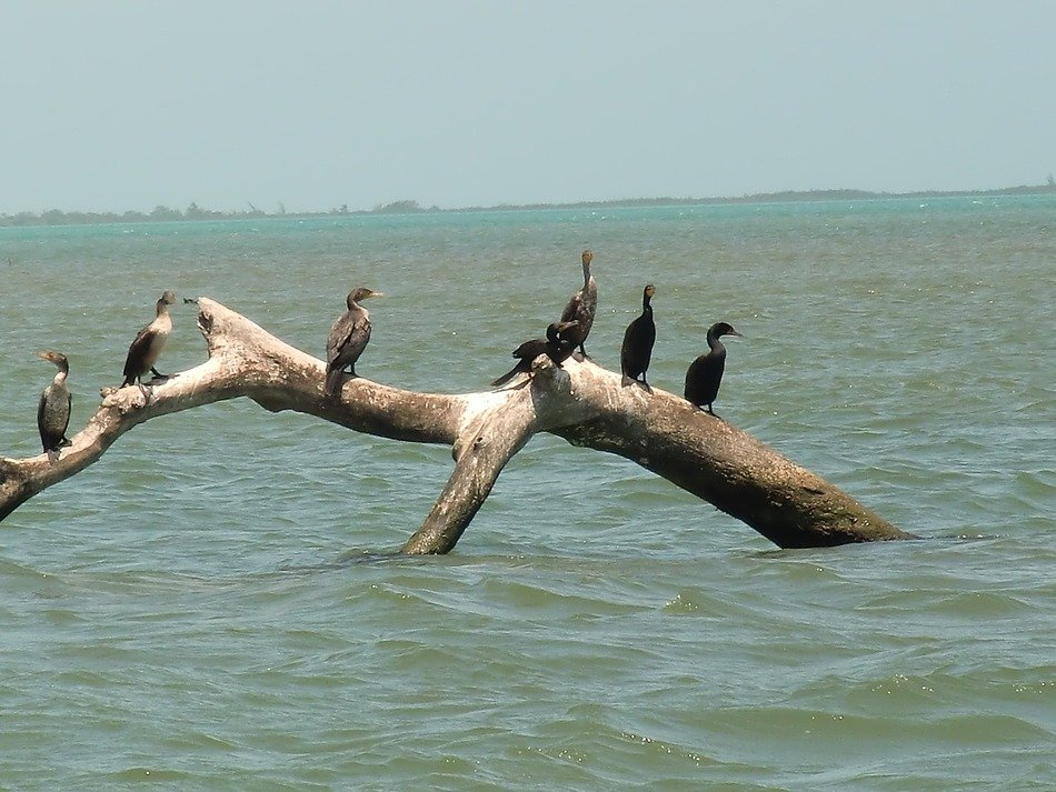 sea birds on the snag
