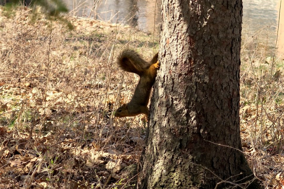 squirrel climbing on the tree in the forest