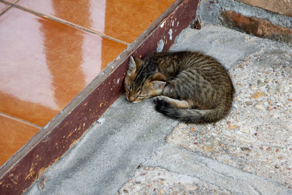 baby cat sleeping outdoor