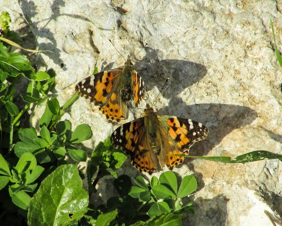 beautiful butterflies on the stone