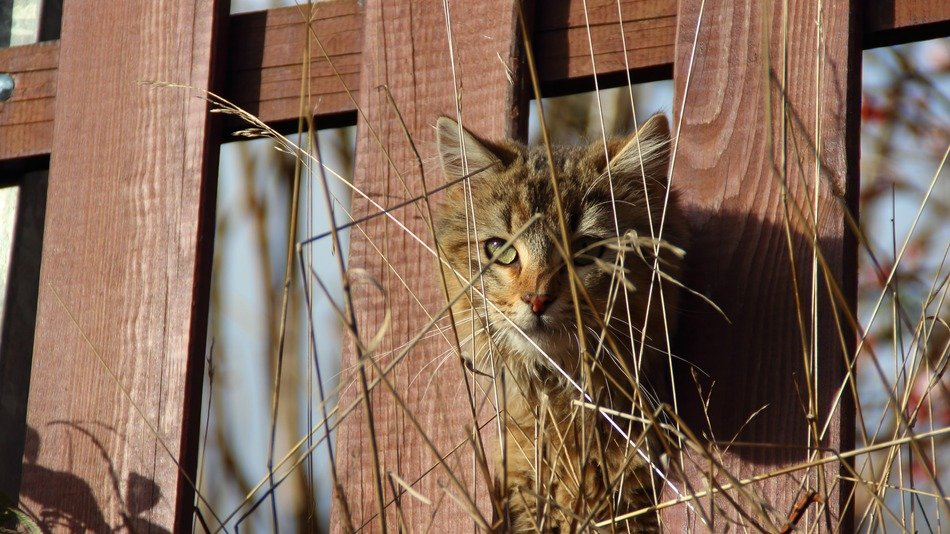 cat in the fence