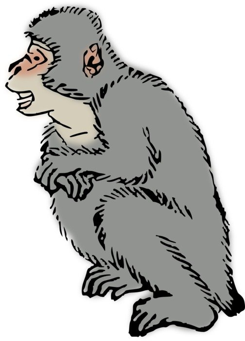 Monkey Macaque drawing