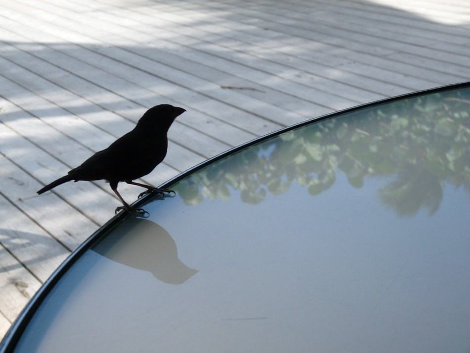 bird sitting on the glass table