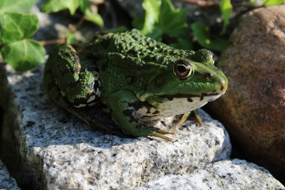 green frog sitting in the stone