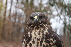 portrait of a bird of prey in the forest