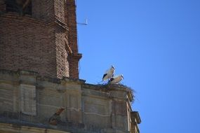 two storks on top of the bell tower