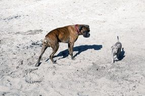 big and small dogs on the sand