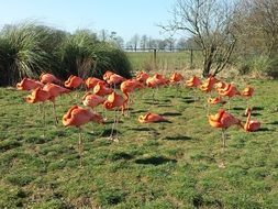 flock of pink flamingos on a summer meadow